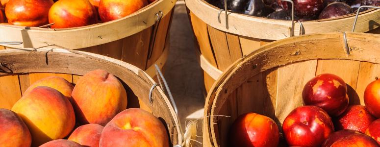 pitta-ete-fruits